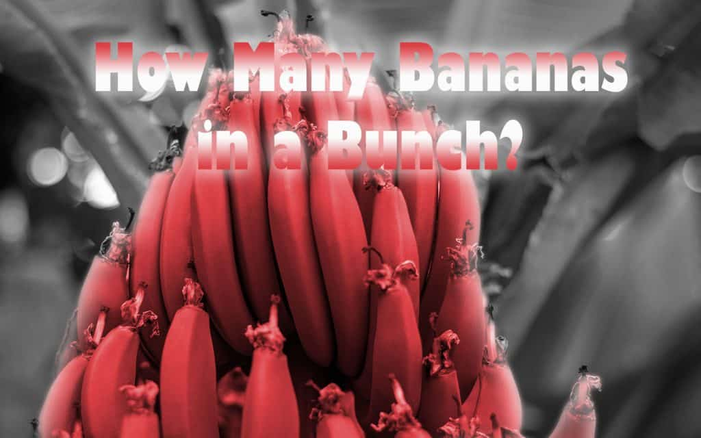 How Many Bananas in a Bunch? And More!